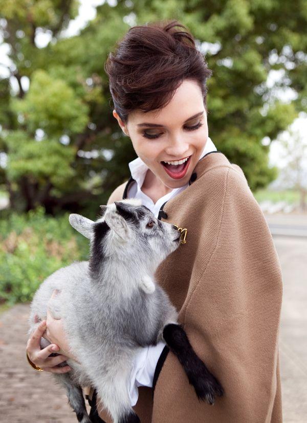 histoire de la laine cachemire