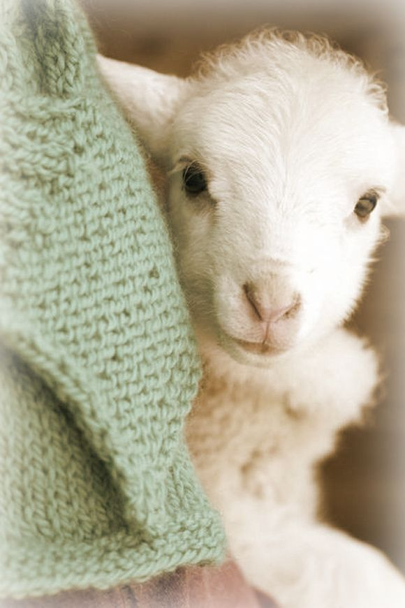 caracteristiques laine lambswool