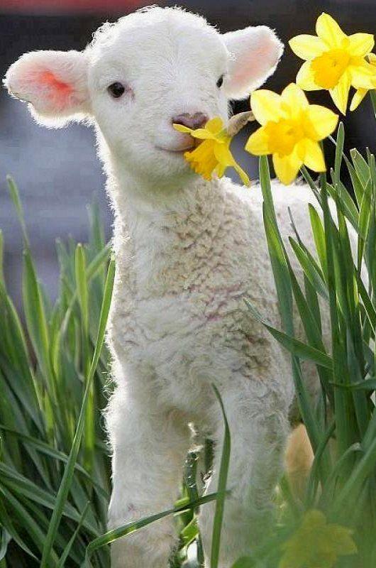 difference laine agneau laine vierge