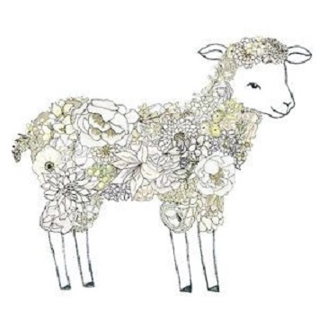 laine-agneau-lavage