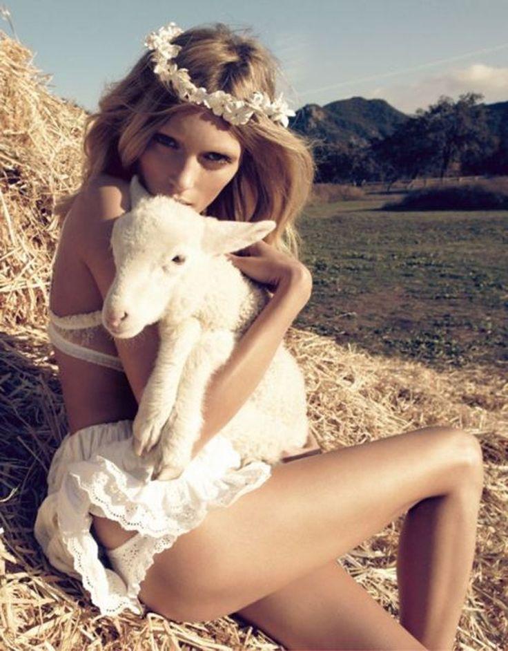 laine agneau qui gratte