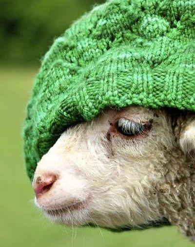 laine qui gratte que faire