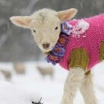 pourquoi laine gratte