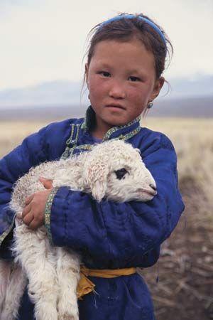 laine agneau mongolie