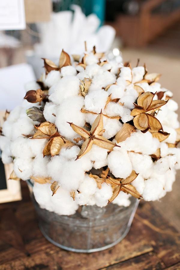 proprietes caracteristiques coton